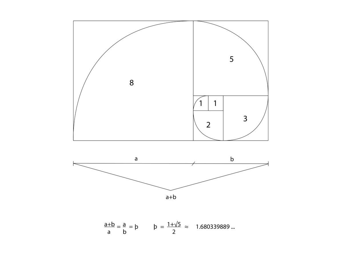 Mathematisches Beispiel des Goldenen Schnitt's (Bildquelle: Natura Concha)